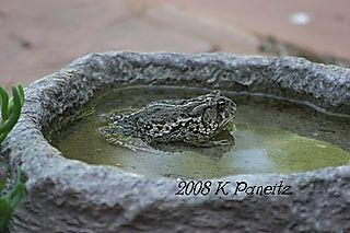 Toad pool1