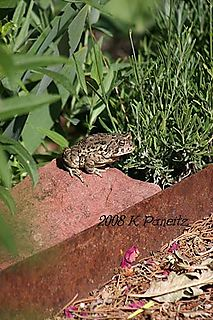 Toad perched