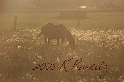 Horse in golden light1