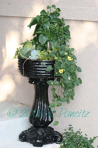 Black pedestal planterJuly08