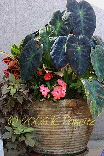 2008 Shade Container