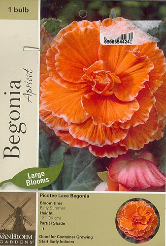 Picotee Lace Begonia Packaging
