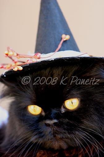 Halloween Regis
