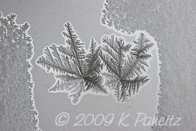 Frost crystals1