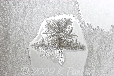 Frost crystals2