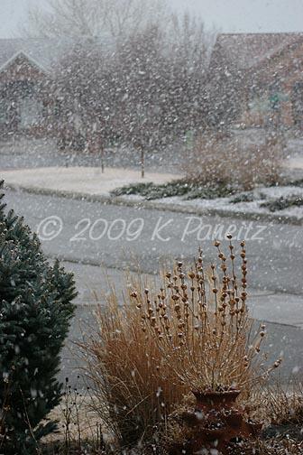 Feb snow4