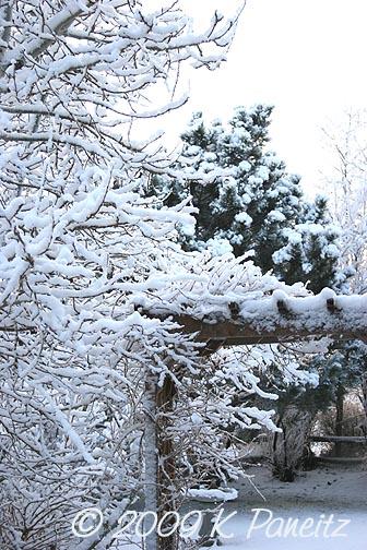 Feb snow1
