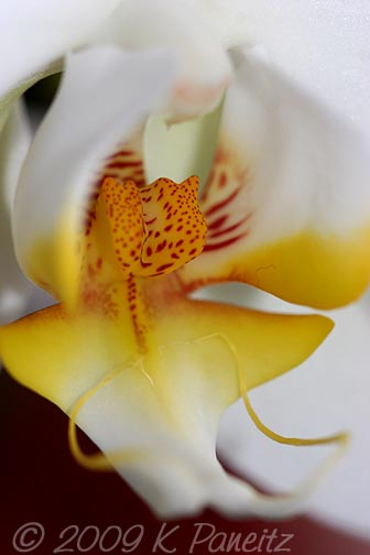 Orchid bloom6