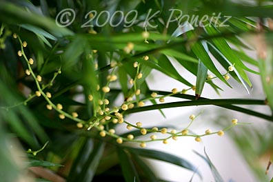 Flowering Houseplant2