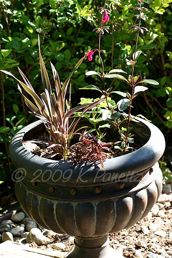 Salvia Flax Container