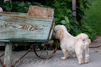 Vintage wheelbarrow1