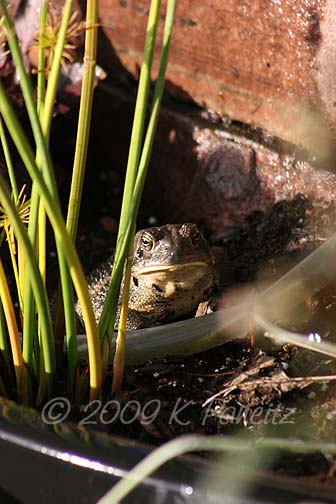 Toad abode1