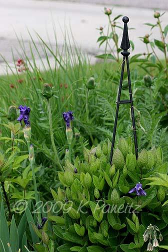 2009 Spring Garden