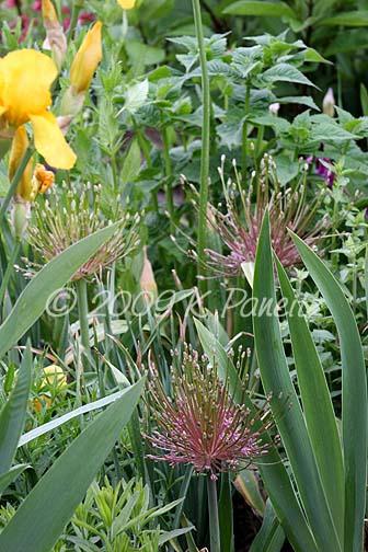 2009 Spring Blooms