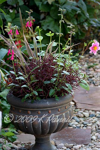 2009 New Zealand Flax Container