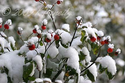 Fall snow1