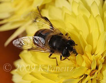 Bee on Mum