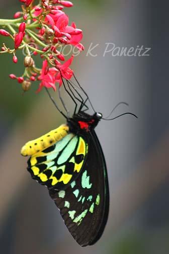 Butterfly Pavillion9