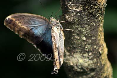 Butterfly Pavillion1