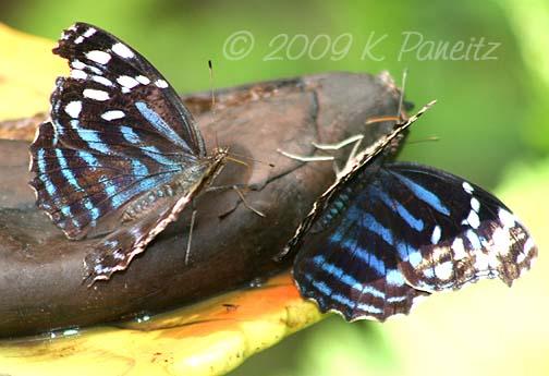 Butterfly Pavillion6
