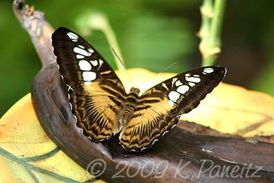 Butterfly Pavillion7