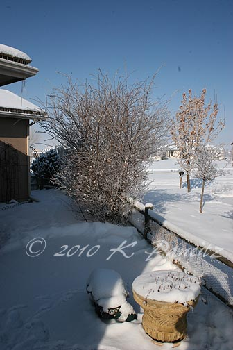 Snow covered yard2