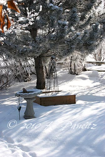Snow covered yard4