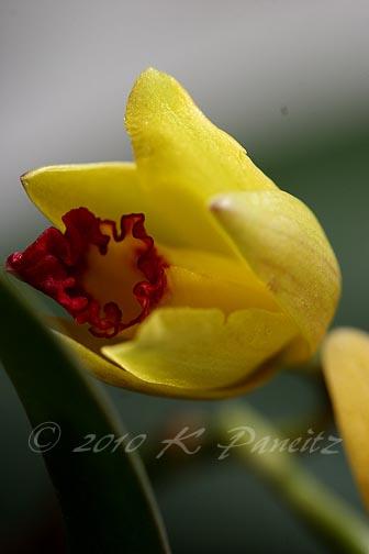 Orchid Alvin Beggman Poem2