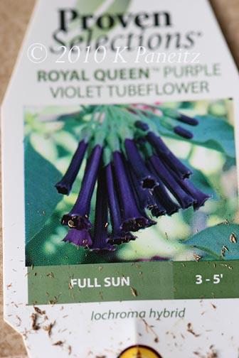 Violet Tubeflower Tag