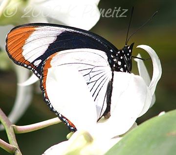 Butterfly Pavillion11
