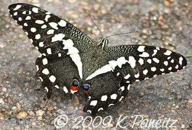 Butterfly Pavillion8