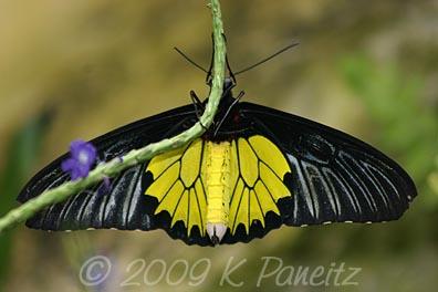 Butterfly Pavillion13