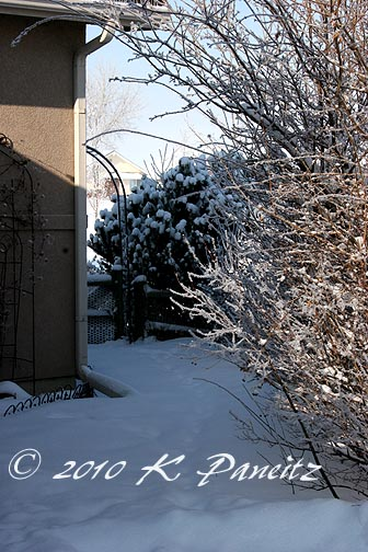 Snow covered yard3