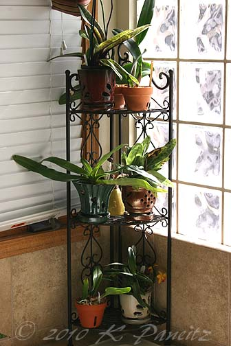 Orchid Shelf