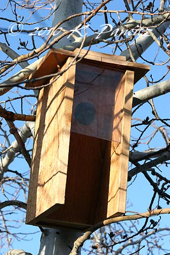 Flicker Nest Box Improved1