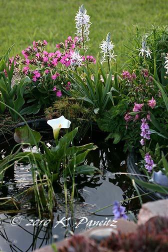 Spring pond1