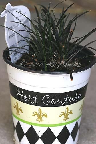 Hort Couture Plants
