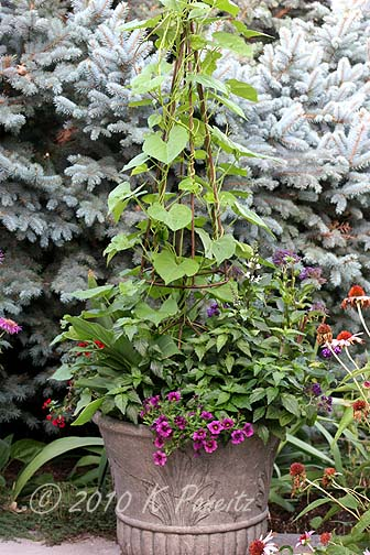 2010 Morning Glory Container