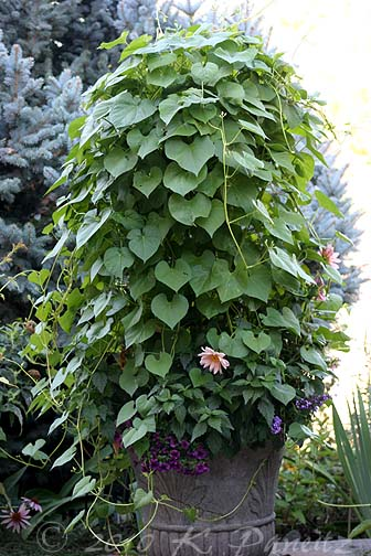 2010 Morning Glory Container1