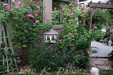 Verbena and roses