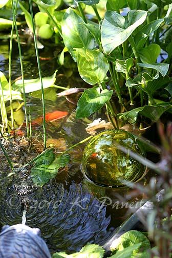 Glass pond float2