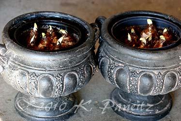 Paperwhite Urns