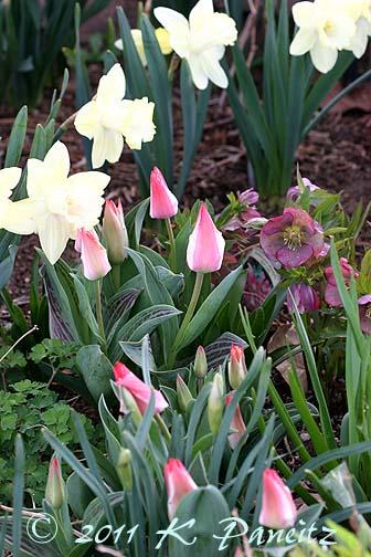 Spring blooms4