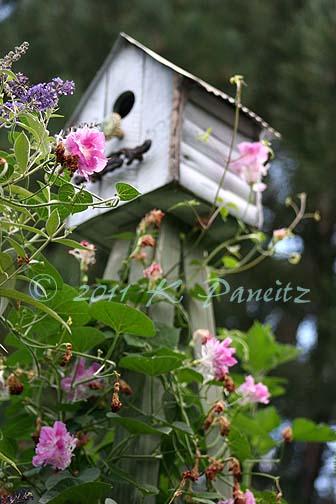 Birdhouse Tuteur