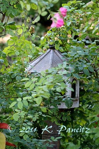 Antique birdfeeder