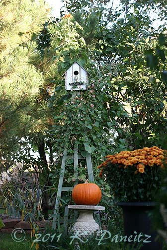 Birdhouse Tuteur Fall
