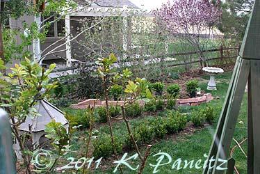 Backyard project1