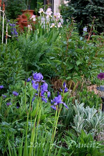 2011 Spring Garden4