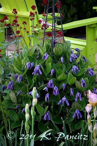 2011 Spring Garden6