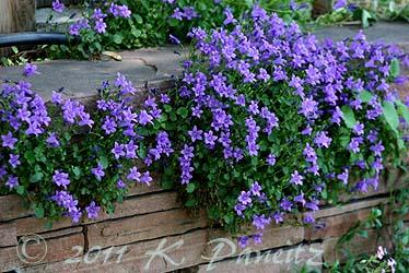 Boulder Garden Tour6